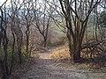 Ridgeway View - panoramio.jpg