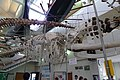 Right whale skeleton.jpg