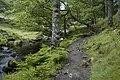 River side path to Watendlath - geograph.org.uk - 888783.jpg