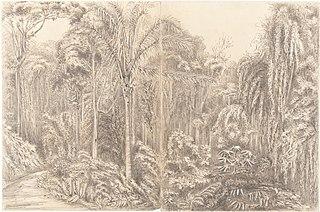 Road to the Presidencia Petropolis Feb.r 2th 1855