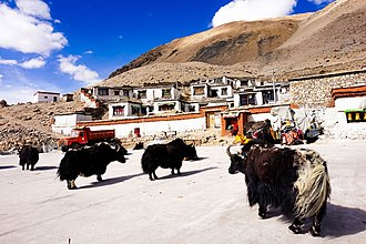 Rongbuk Monastery - A view of the modest Rongbuk Monastery with yaks in the foreground