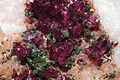 Rosélite, conichalcite, dolomite 1100.1.2014 1.jpg