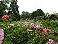 Rosarium Baden Doblhoffpark Gartenanlagen 08.jpg