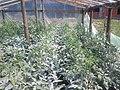 Rosii in solar - panoramio (1).jpg