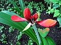 Rostliny ve skleníku v Lednici (4).jpg