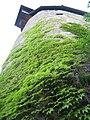 SCHLOSS TURM 2 - panoramio.jpg
