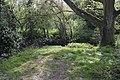 Salary Brook Local Nature Reserve 2.JPG