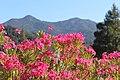 San Aselmo, CA USA - panoramio (2).jpg