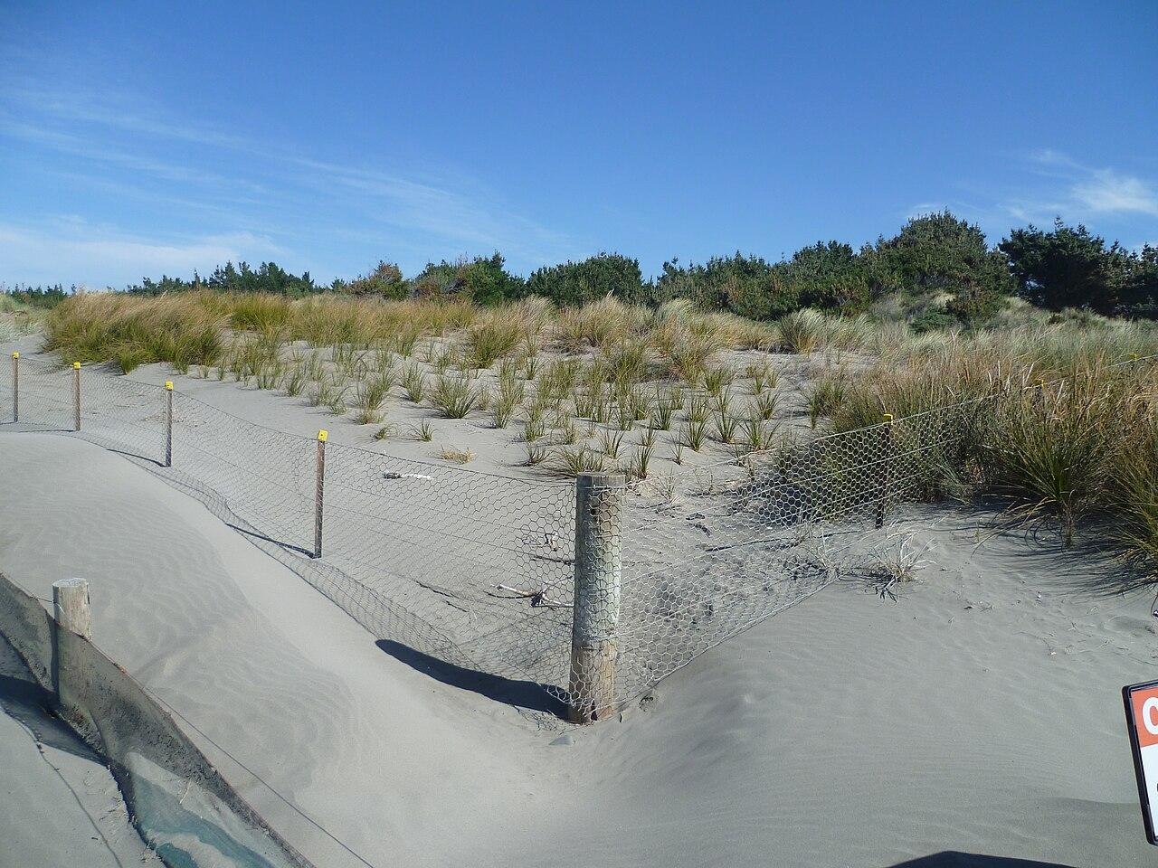 File Sand Dunes At Spencer Park New Zealand Jpg Wikipedia