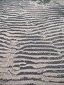Sand ripples, Longniddry - geograph.org.uk - 785826.jpg