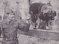 Sarplaninac training in Yugoslav Army.png