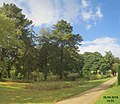 Savill Garden (32605482640).jpg