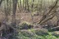 Schlitz Pford Fraurombach Breitecke NR 81455 Dead Wood c N.png