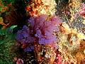 Seaweed at Partridge Point P7190534.JPG