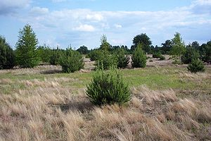Ecological succession - Secondary succession: trees are colonizing uncultivated fields and meadows.