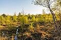 Senden, Venner Moor -- 2020 -- 6683.jpg