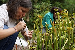 Service botanist Mara Alexander taking a water sample (9666514088).jpg