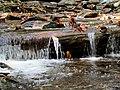 Setrock Creek Falls Black Mountain Campground Pisgah Nat Forest NC 4393 (37947701691).jpg