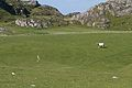 Sheep on golf course, Iona (15227869066).jpg