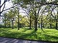 Sherrard's Green - geograph.org.uk - 6152.jpg