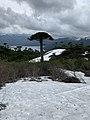 Sierra Nevada Conguillio.jpg