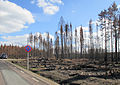 Skogsbranden i Västmanland 2014 - Brandområde utmed U668 mellan Stabäck och Hästbäck - 5589.jpg