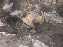 Skull in dmanisi archaeological site.JPG