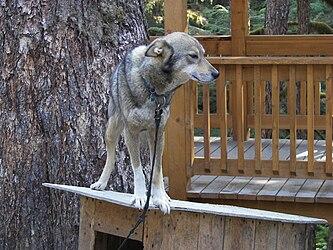 Sled Dog Discovery & Musher's Camp 22.jpg