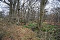 Small stream and woodland, South of Stonegate Station - geograph.org.uk - 1105541.jpg