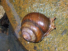 Snail Camp Gully Creek.jpg