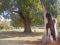 Sotto l'ombra delle querce.jpg