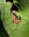 Spider (5657822287).jpg