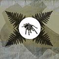 Spiderfern (14441173434).jpg