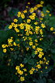 Spring-forest-wildflowers - West Virginia - ForestWander.jpg