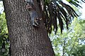 Squirrel hanging from a tree.jpg