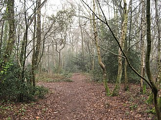 Mousehold Heath - Woodland at the southern tip of the heath