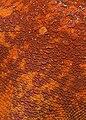 Starfish closeup.jpg