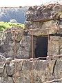 Starr-090609-0247-Cenchrus clandestinus-habit and Portuguese oven-Haiku-Maui (24336018903).jpg