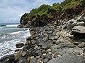Starr-180421-0032-Thespesia populnea-coastal ledge with Kim-Honolua Lipoa Point-Maui (28572009687).jpg