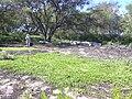 Starr 040203-0005 Jacquemontia ovalifolia subsp. sandwicensis.jpg