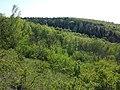 Steinberg westlich des Buchbergs sl28.jpg