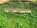Stone bench, Kemback - geograph.org.uk - 1441505.jpg