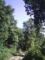 Strada nel bosco - panoramio (2).jpg