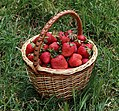 Strawberries in basket 2018 G1.jpg