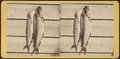 String of lake trout, from Robert N. Dennis collection of stereoscopic views.png