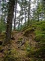 Summer Flora on the Chilcoot Trail in Yukon.jpg
