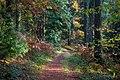 Sunlight on a Woodland Path in Autumn - panoramio.jpg