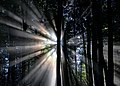 Sunrays through the trees (Unsplash).jpg