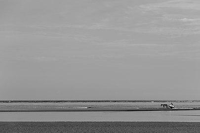 Superagui - Habitantes transitando na praia deserta.jpg