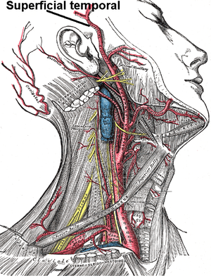 model lidského těla